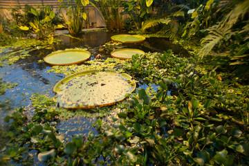 Aarhus, Denmark: Hothouse at the botanical garden in Aarhus