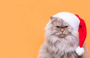 Close-up photo of a fluffy gray cat in a Christmas hat on an orange background. Cat in a hat Santa is isolated on an orange background. Pets at Christmas. Copyspace