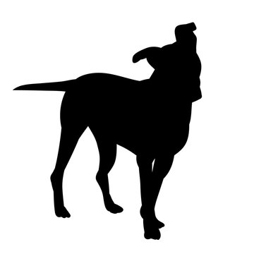black silhouette of a small dog