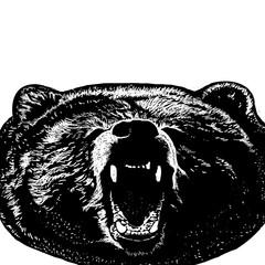 Bear art illustration