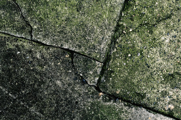 Wall Mural - Cracked concrete flooring surface covered in green moss