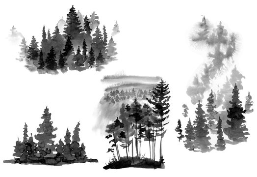 Set of Black and White Watercolor Silhouette of Conifer Tree, Monochrome Winter Woodland, Forest Landscape