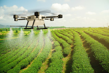 Agriculture drone fly to sprayed fertilizer on the tea plantation. Agricultural technology concept. - Image