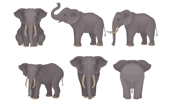 Realistic Detailed African Huge Mammals Vector Set