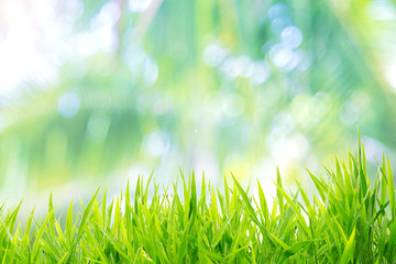 Tuinposter Gras Spring or summer and grass field with sunny background