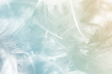 Blurred pastel feather blur, Pastel colors are simulated in feathers