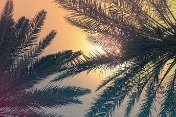 Palm tree leaves under tropical sky,