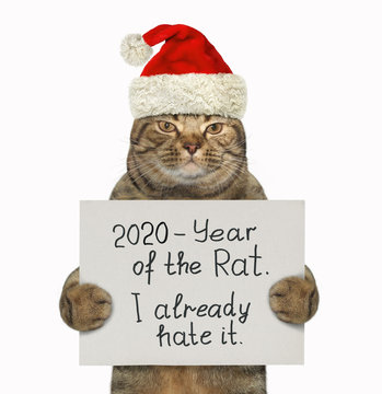 """The beige cat in the red Santa Claus hat is holding a sign that says  2020 - Year of the Rat. I already hate it. """". White background. Isolated."""