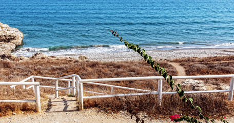 Zweig bei Strand am Meer