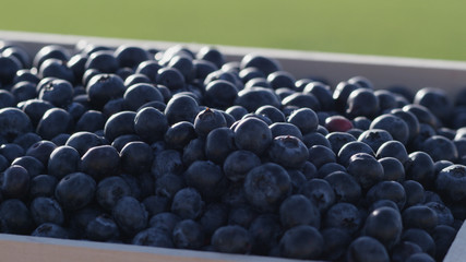 Close up of blue berries in wooden crate