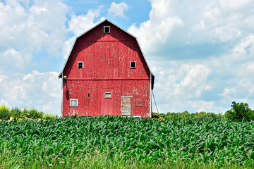 Red Barn and Corn Field