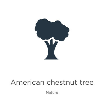 American chestnut tree icon vector. Trendy flat american chestnut tree icon from nature collection isolated on white background. Vector illustration can be used for web and mobile graphic design,