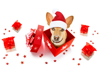 Photo sur Plexiglas Chien de Crazy christmas santa claus dog