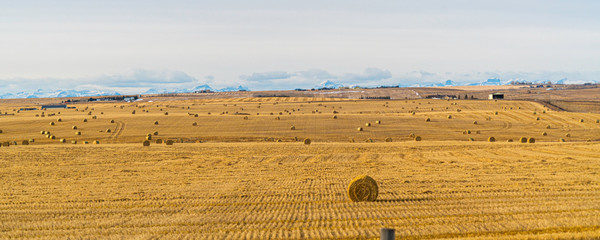bales of hay on a farm field with the rocky mountains in the background