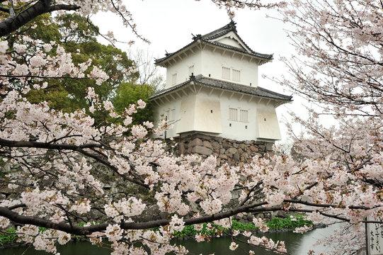 大分城の桜