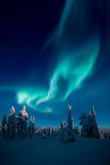 Polar night in the forest with northern lights on the sky