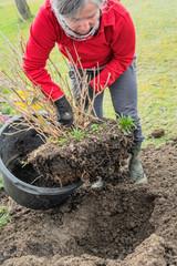 Gartenarbeit in der kalten Jahreszeit