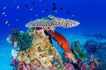 Colorful tropical fish on a healthy coral reef in Thailand Wall mural