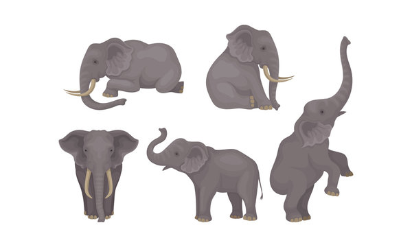 Realistic Detailed African Huge Mammals Vector Set