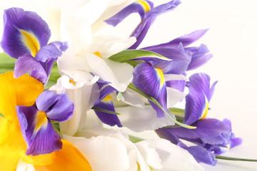 Foto op Plexiglas Iris flowers irises and tulips lie on a white background