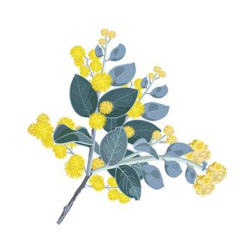 Realistic Wattle Bouquet
