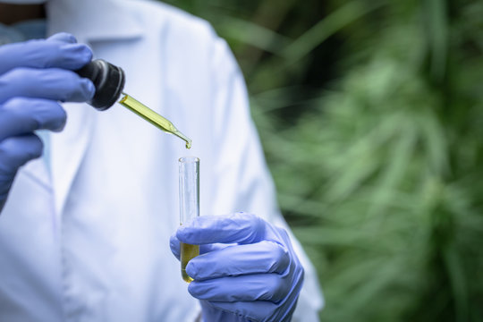 The researchers' hands are pouring CBD hemp oil into a glass tube. To be put to trial.Concept of alternative medicine, medicine, experiment, research, medicine. Close up.