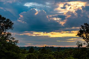 カンボジア  夕方のジャングル