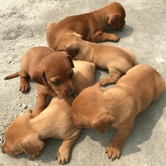 Cute puppies dog colections - Image