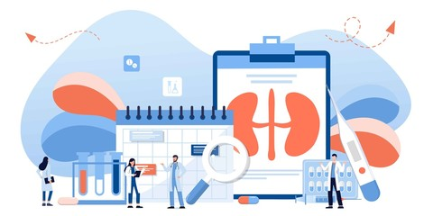 Kidney healthcare, doing medical research.urology and nephrology. nephroptosis, renal failure, pyelonephritis, diseases, kidney stones, cystitis. For website, app, banner, flyer