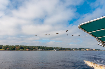 Many pelicans flying in formation, out of focus, next to the bow of a fishing boat, in the St. John's river, Jacksonville, Florida, USA.