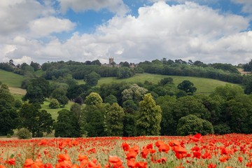 Poppies at Stow on the Wold, Cotswolds, Gloucestershire, England