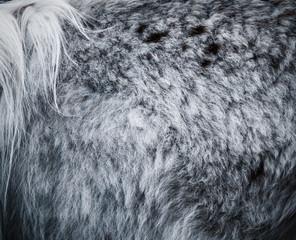 Poster Lama closeup of the lama fur