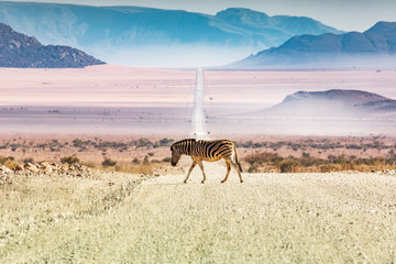 Fotobehang Zebra Zebras crossing the road, Namibia, Africa