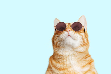 Closeup portrait of funny ginger cat wearing sunglasses and looking up isolated on light cyan. Copyspace.