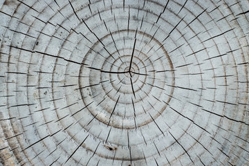 Close up view of tree rings