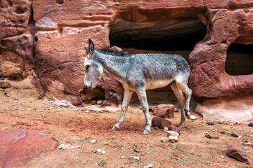 Photo sur Aluminium Ane donkey among the red rocks