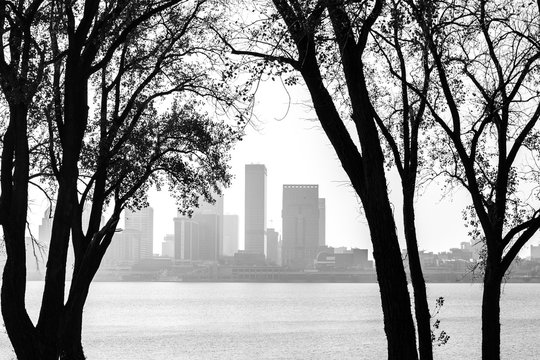 Black and white view of tree trunks on the Ohio River framing Louisville, Ky.