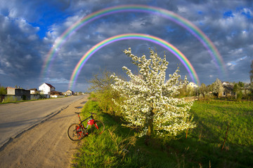 Wall Mural -  Apple blossom clouds storm