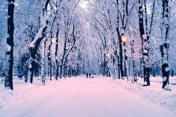 Photo sur Aluminium Rose clair / pale evening park after snowfall