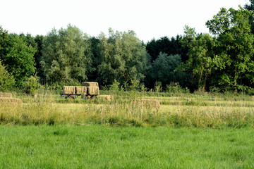 Meadows, at the edge of the forest. A trailer full hay bale. Summer in Belgium
