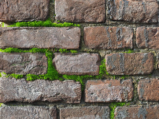 dark red brick wall with moss background
