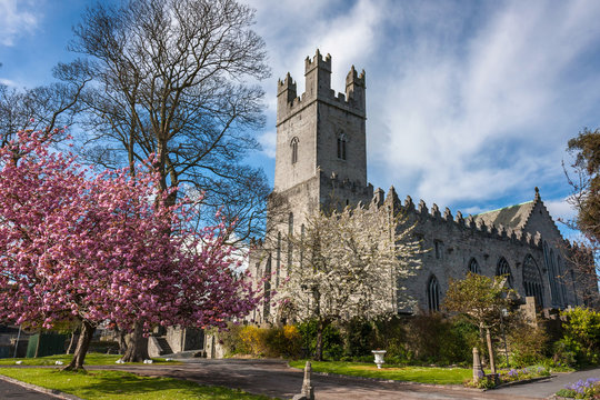Cherry blossom in spring in Limerick, Ireland