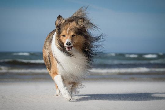 dog on the windy beach