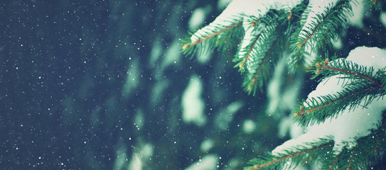 Photo sur Aluminium Bleu nuit Winter Holiday Evergreen Christmas Tree Pine Branches Covered With Snow and Falling Snowflakes, Horizontal