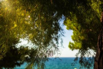 Sun Rays shining through a tree at the coast of the Mediterranean sea at the promenade near the...