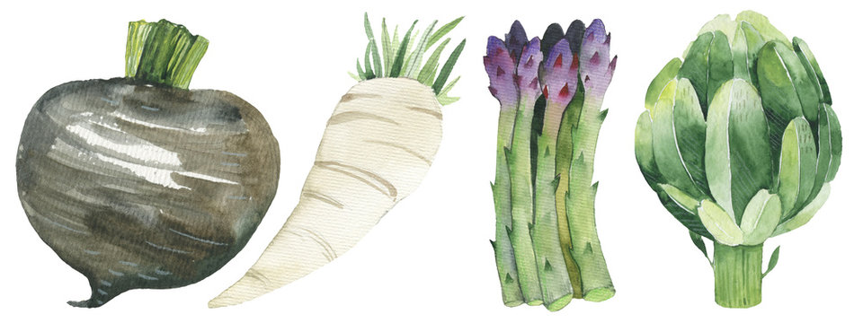 Watercolor painted collection of vegetables. Hand drawn fresh food design elements isolated