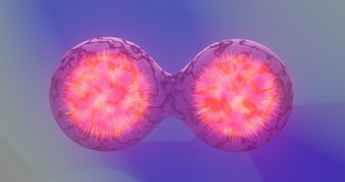 Cells at the verge of splitting apart. cell division of bacteria. 3D rendered illustration