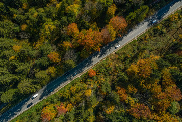 Vertical viewfrom a drone at a autumn road.