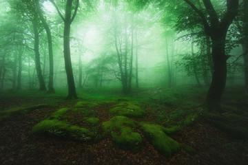 beautiful foggy forest in Monte de Santiago