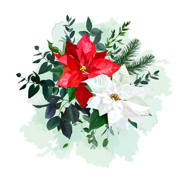 Red and white poinsettia flower, christmas greenery, emerald eucalyptus